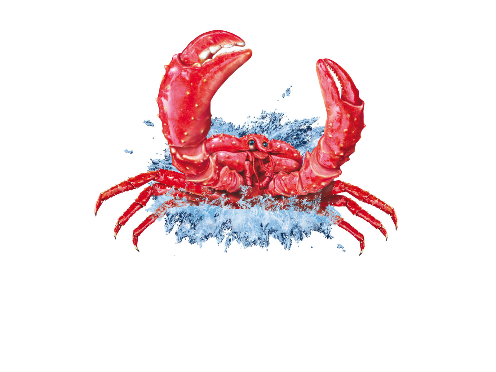 françois-poulain-illustration-animaux-crabe.jpg