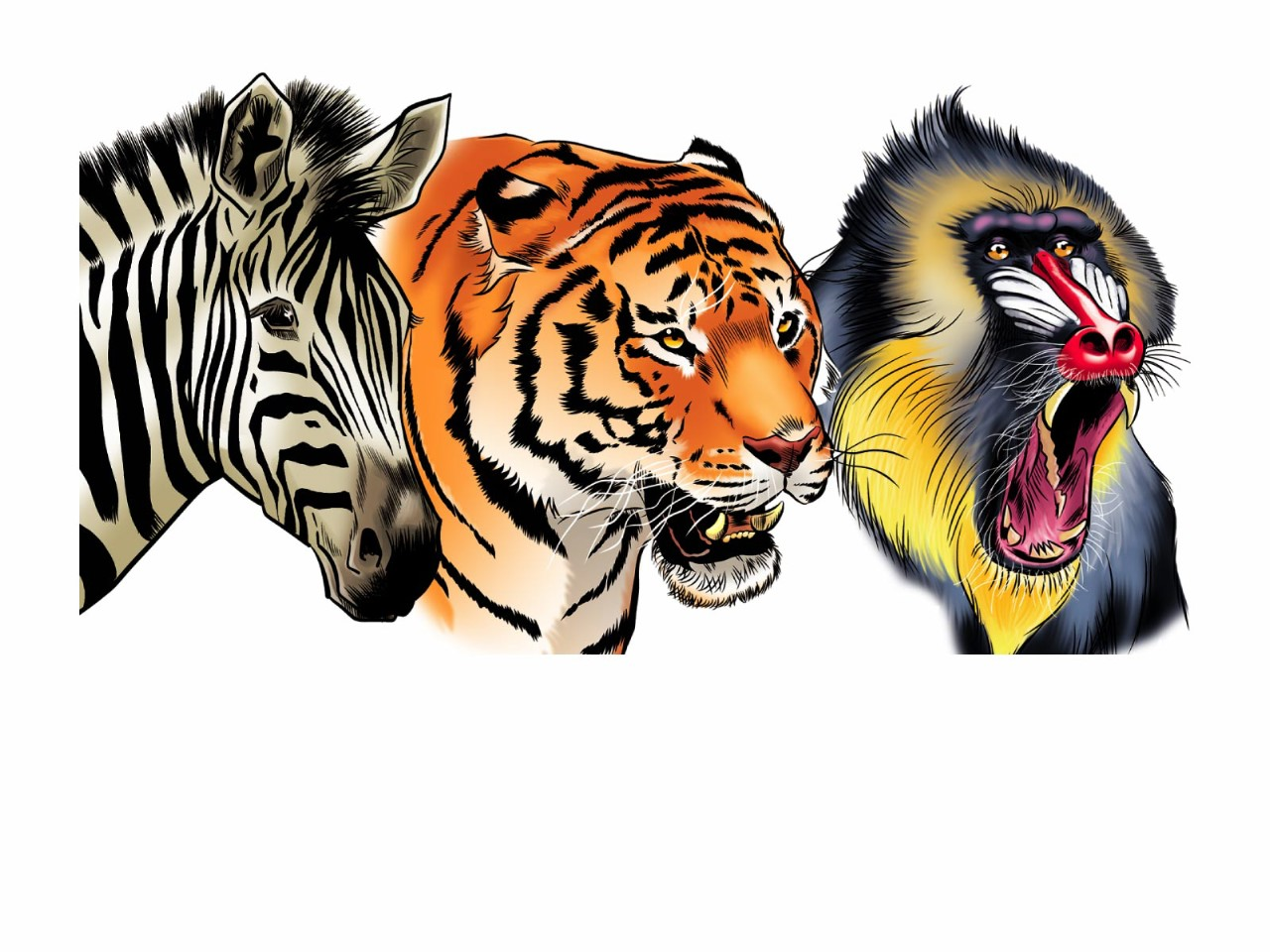 BEAUDENONThierry-Illustrations-ANIMAUX-4367
