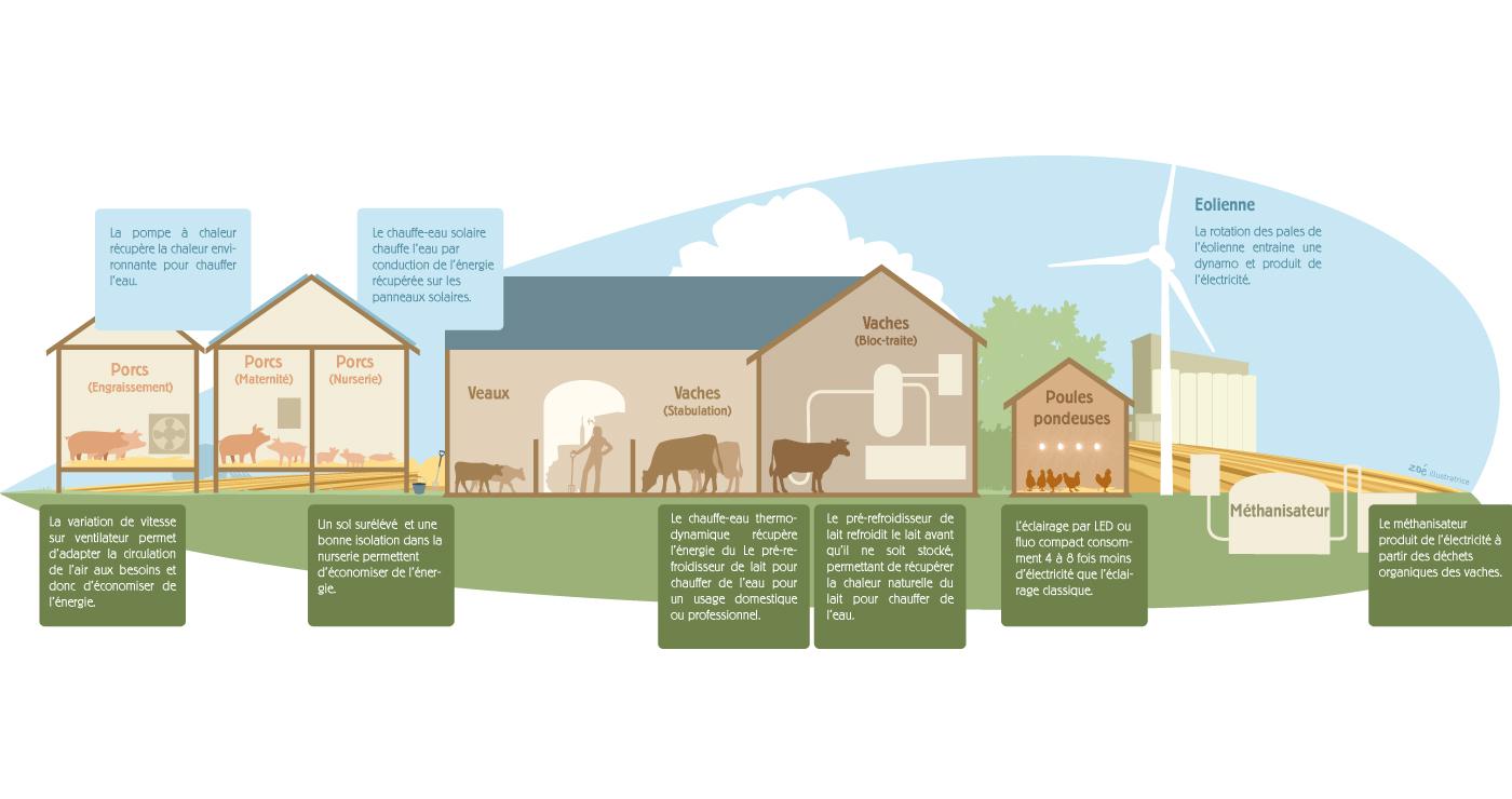 Infographique-Zoe-EDF-ferme