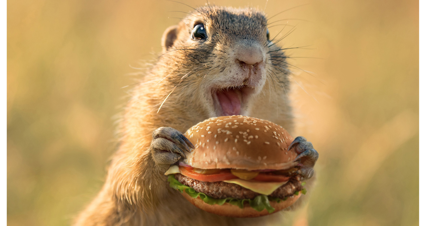 illustration-3D-marcel-laverdet-animaux-fastfood-04 - Copie