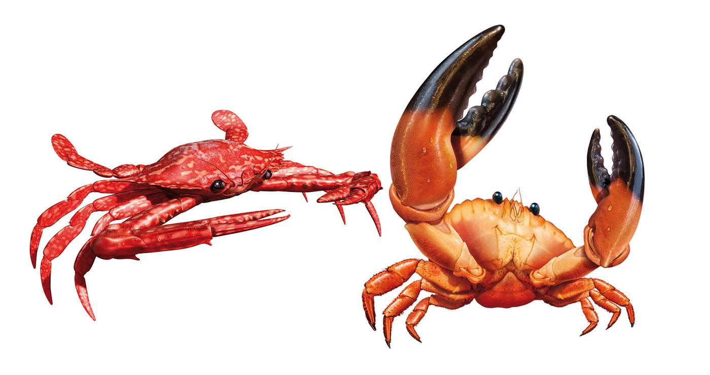 illustration 3D francois poulain crabes 04