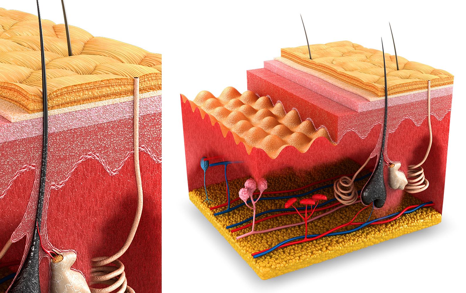 illustration-3D-philippe-raimbault-peau-medical