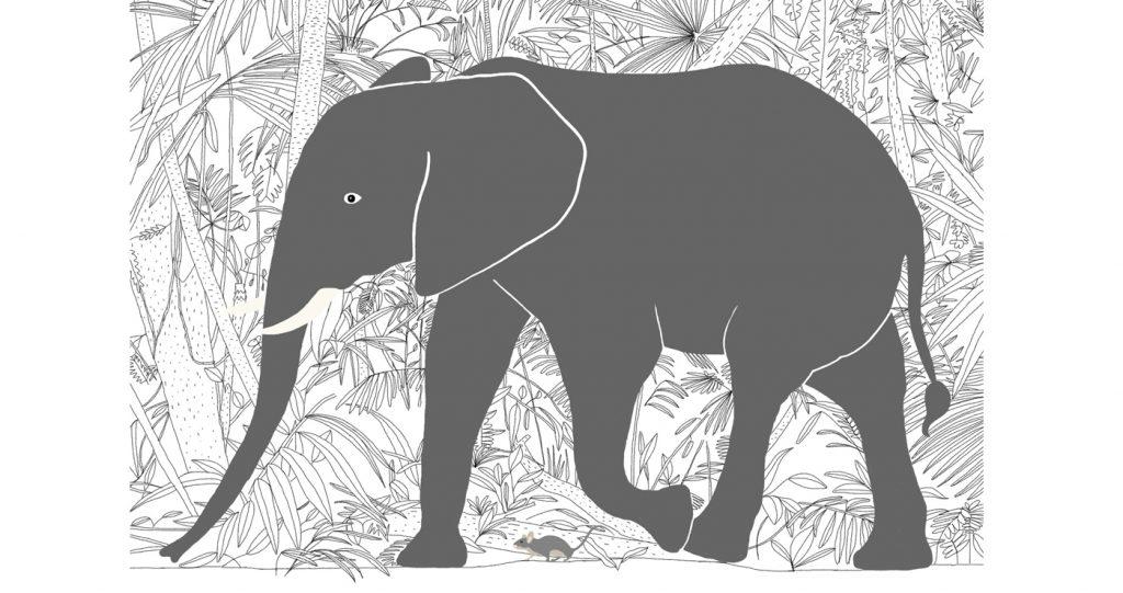 illustration-balthazar-animaux-elephant-06
