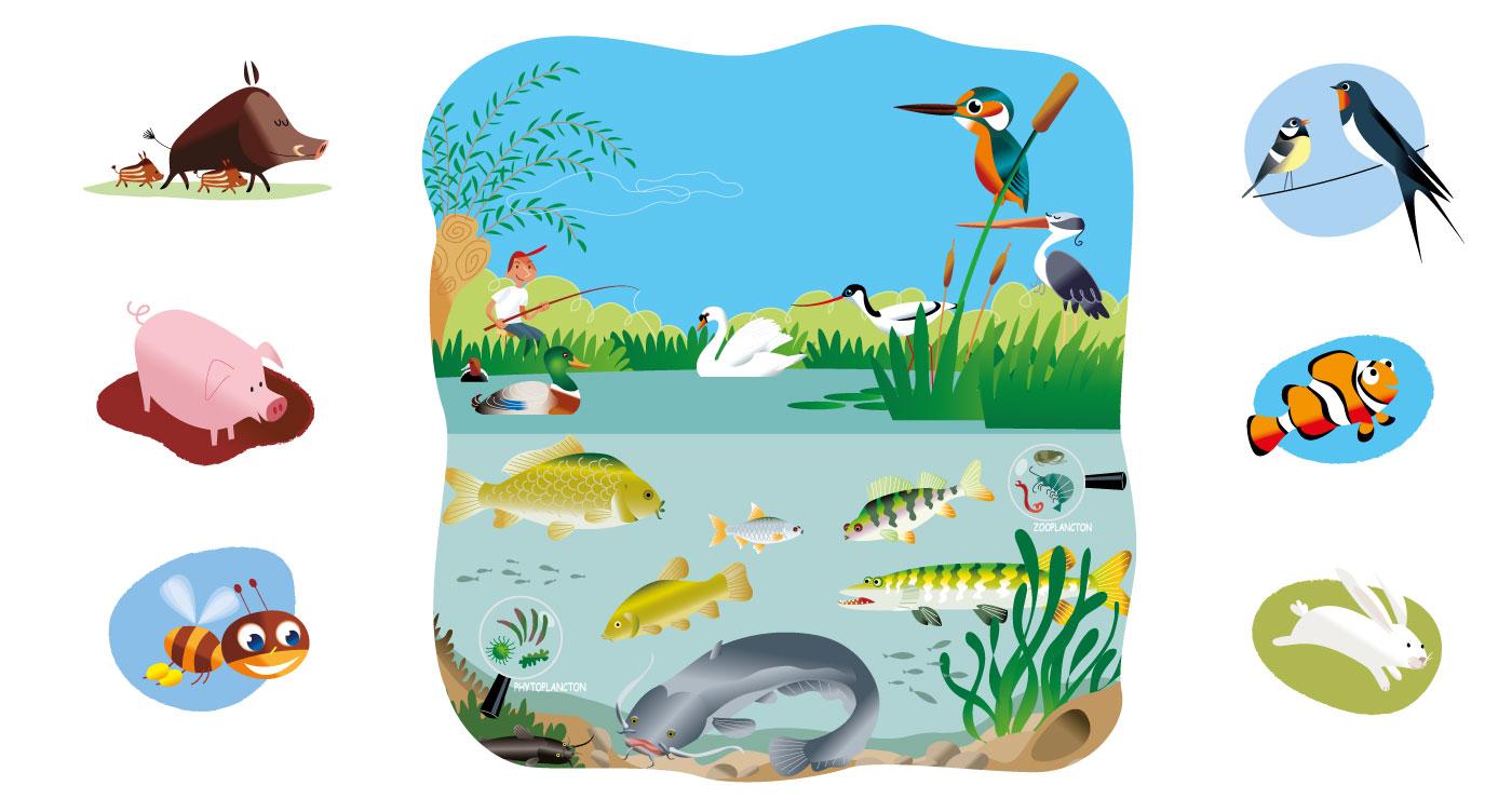 illustration erick duhamel animaux 2
