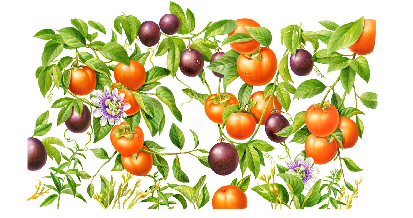 illustration fred van deelen alimentaire 1 09