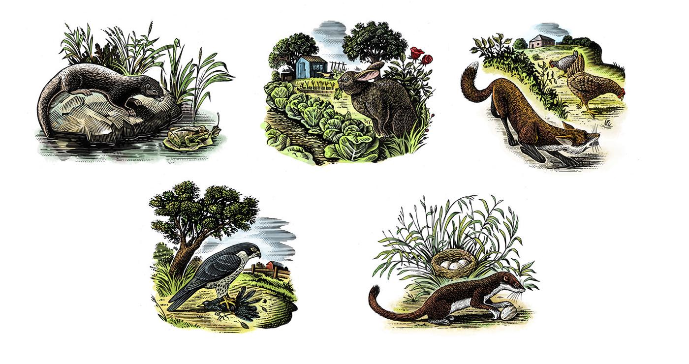 illustration frederik gravure animaux 01 1