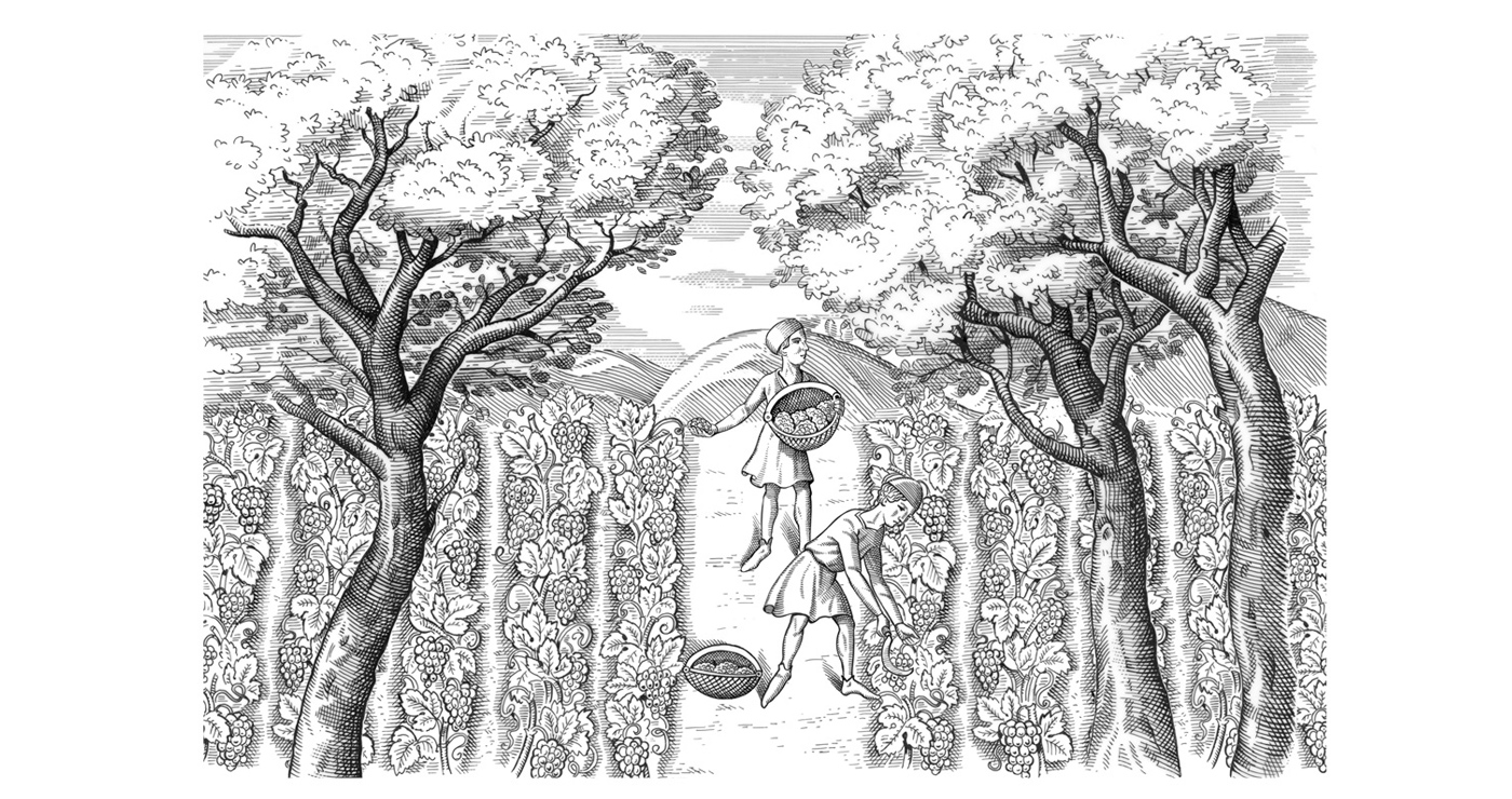 illustration frederik gravure botanique 01 1