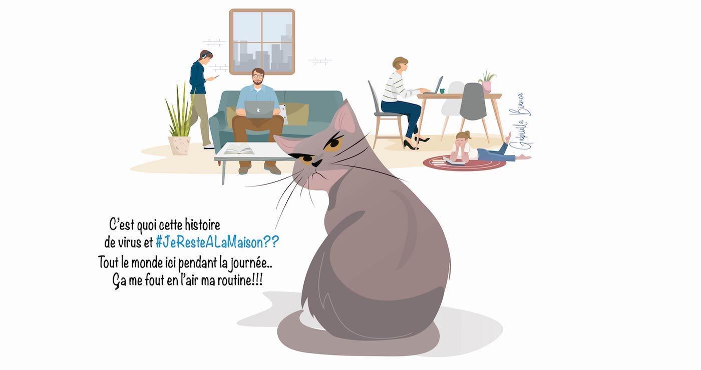 illustration gabriella bianca chat jerestealamaison 03