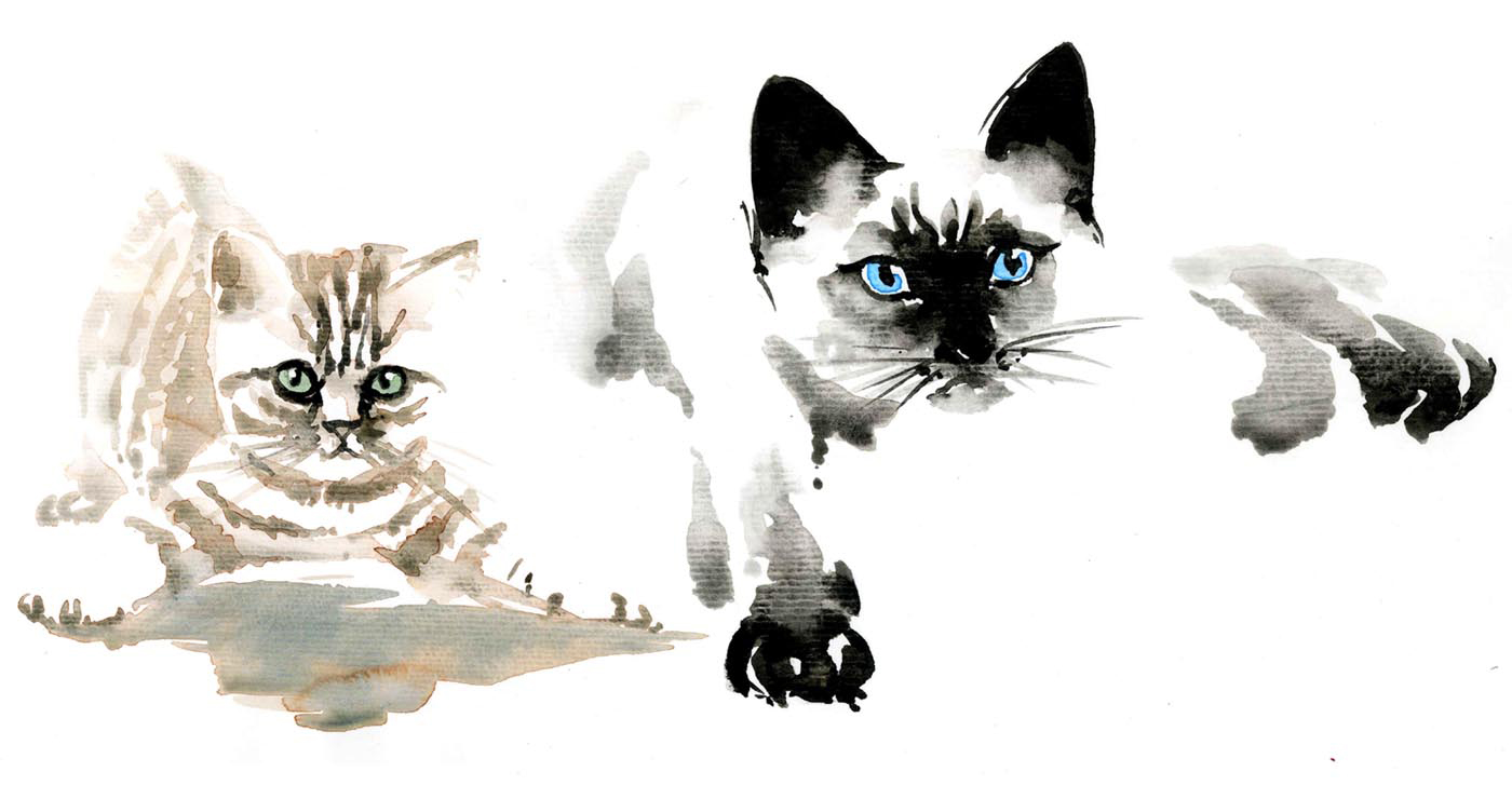 illustration-yves-perron-aquarelle-chats