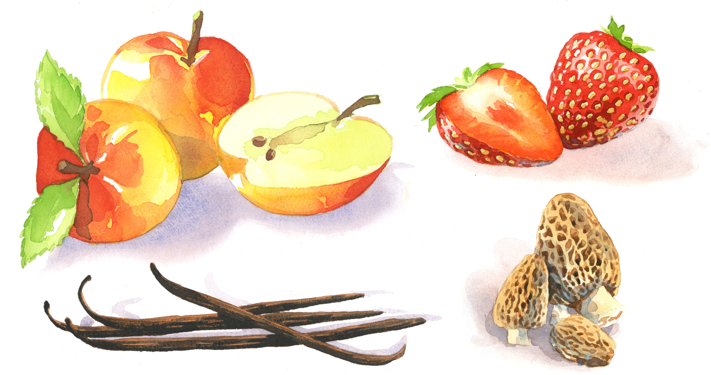 illustration-yves-perron-aquarelle-fruits-1
