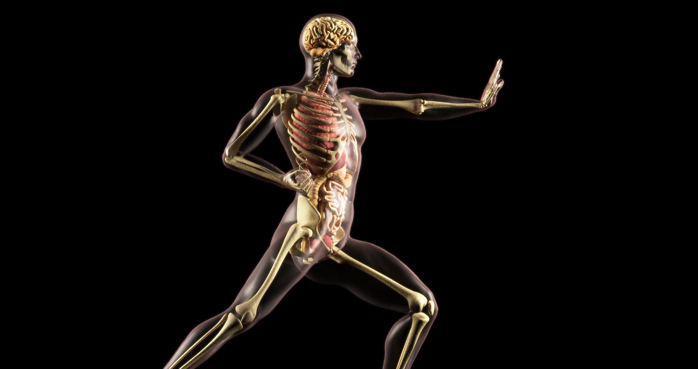 philippe-raimbault-3d-squelette-organes