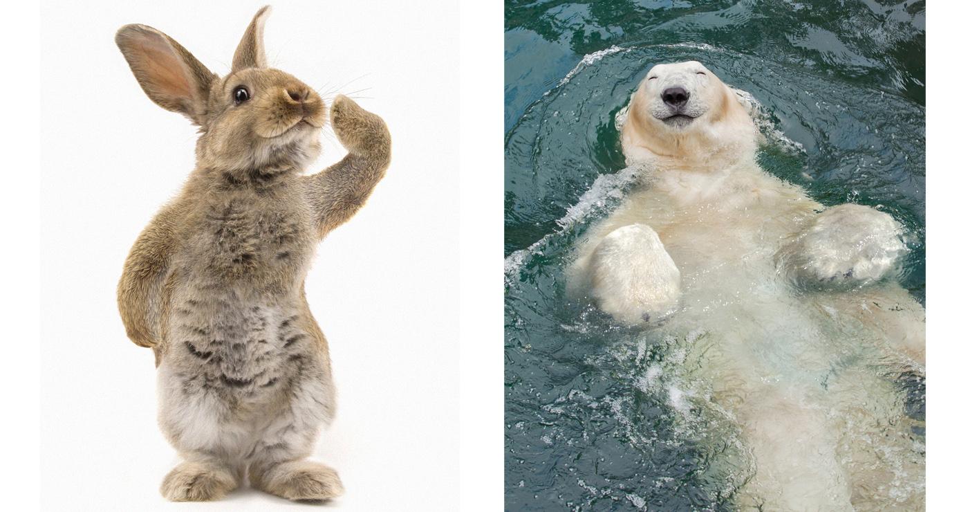 illustration-3D-marcel-laverdet-animaux-humour2-04