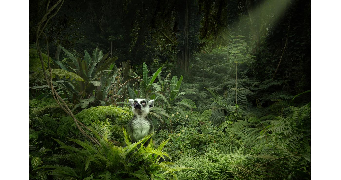 illustration-3D-marcel-laverdet-animaux-jungle-07