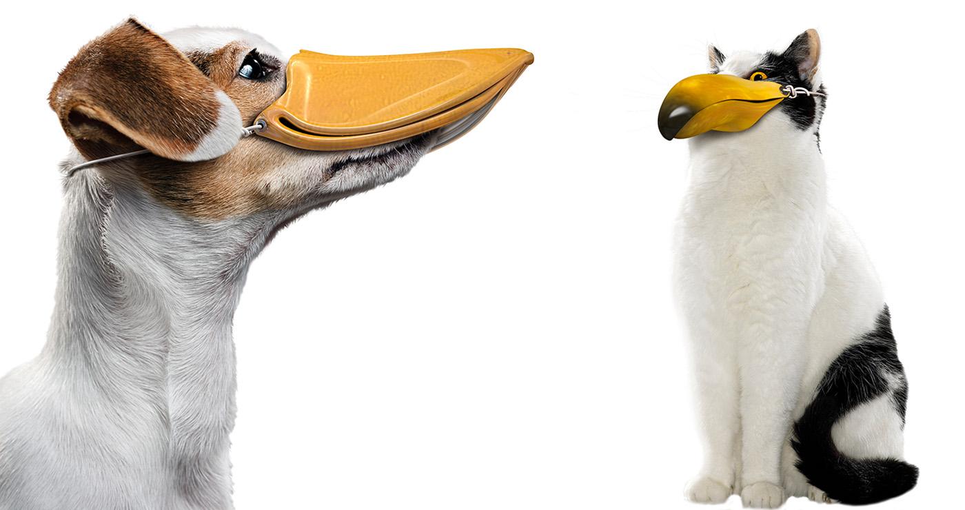 rough-francois-poulain-chien-chat-08
