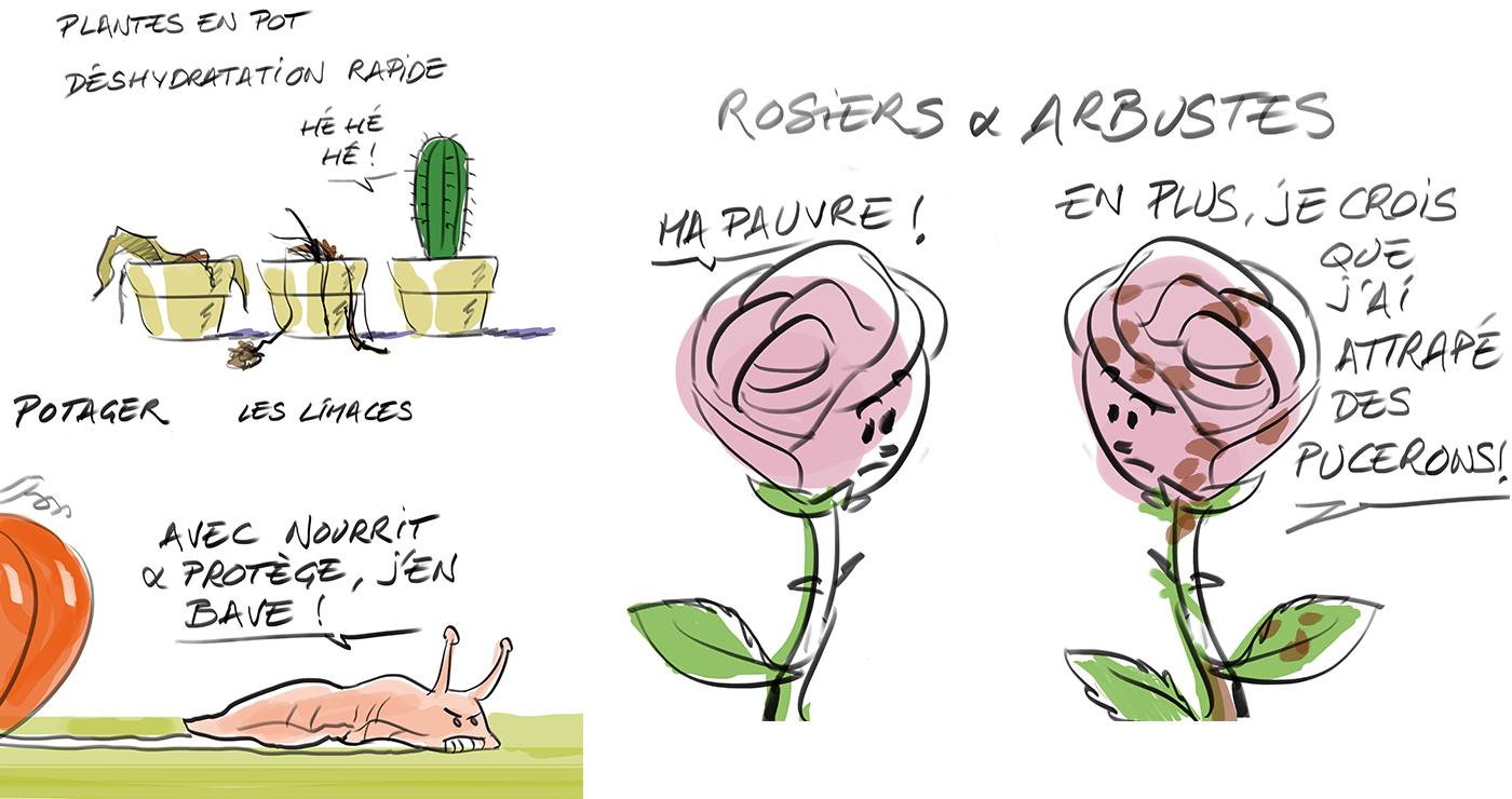 rough workshop manuel fontegne jardinage 3